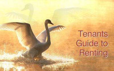 Tenants Guide To Renting
