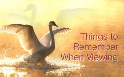 Things To Remember When Viewing